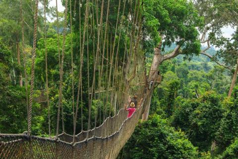 Ghana's Kakum Canopy Walk isn't for the faint of heart.
