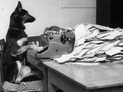 "This gives a whole new meaning to the expression ""working like a dog."""