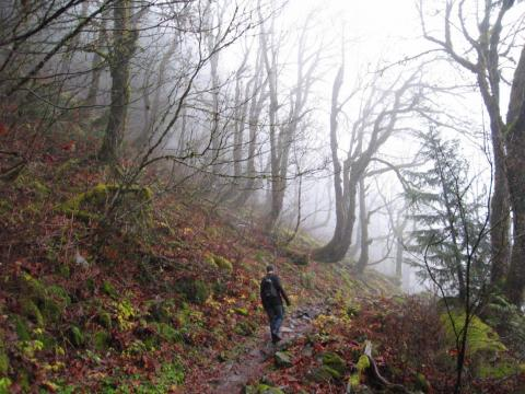 Ir a dar un paseo por la naturaleza.