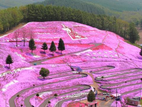 De lejos este parque en Hokkaido parece que está cubierto de pintura rosa.