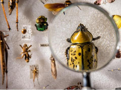 Insects are going extinct eight times as fast as mammals, birds, and reptiles.