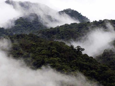 Monteverde Cloud Forest, Costa Rica