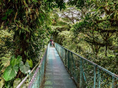 Monteverde Cloud Forest.