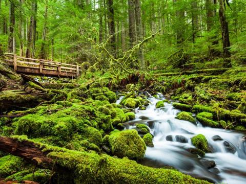Olympic National Forest, Washington, United States