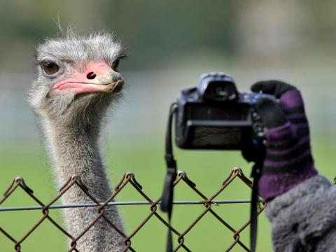 This ostrich is ready for his close-up.