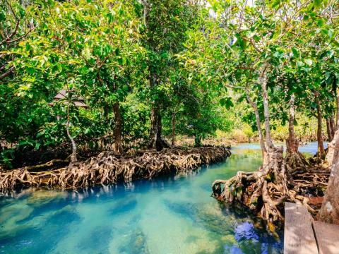 Pa Phru Tha Pom Khlong Song Nam, Thailand