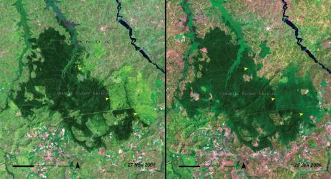 This pair of images shows how Mabira Forest in Uganda changed between 2001 (left) and just 5 years later (right).