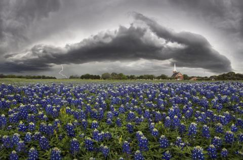 Incluso cuando se enfrenta al peor clima de Texas, los campos de bluebonnet destacan.