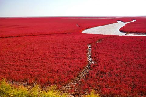 La Playa Roja está ubicada en la provincia de Lioning, China.