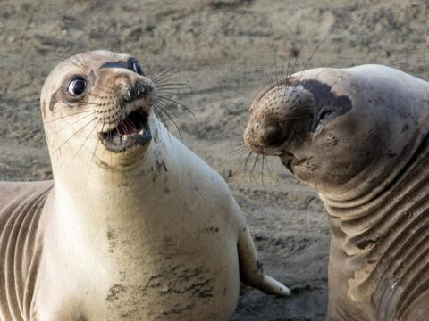 This seal has the ultimate disgusted face.