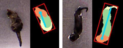 Sistema de detección de la postura y las partes de los animales.