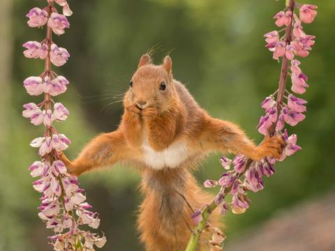 Squirrels, apparently, are a lot more flexible than we thought.