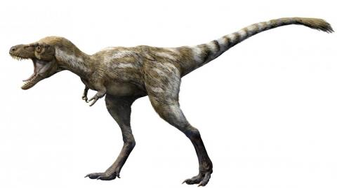T. rex had a fairly short lifespan by human standards. No known T. rex lived past the age of 30.