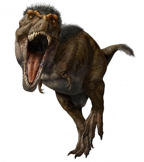 The T. rex rocked a mullet of feathers on its head and neck, and some on its tail too.