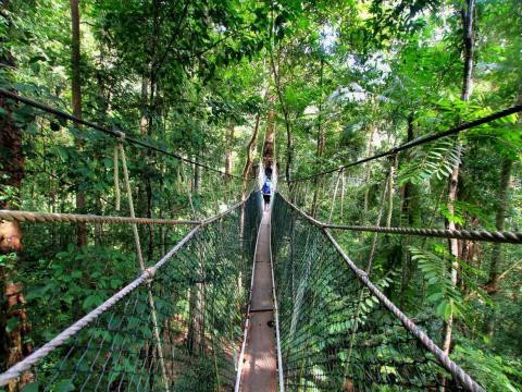 The canopy walkway at Taman Negara, one of the oldest rainforests in the world.
