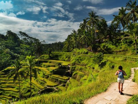 Terraza de arroz de Tegalalang, Tegalalang y Ubud, Indonesia