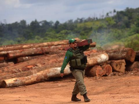 Agent Alex Lacerda of Brazil's Institute of Environment and Renewable Natural Resources carries a sample of wood that was confiscated at an illegal sawmill.