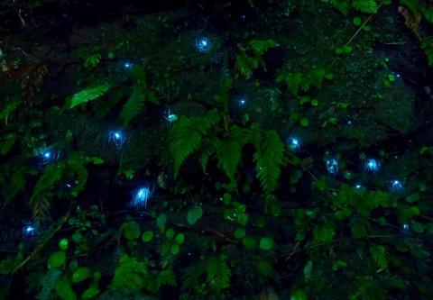 El brillo de los bichos ilumina las cuevas.