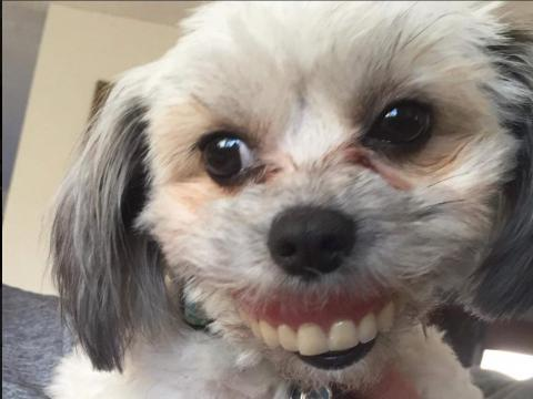 When this dog stole their owners' dentures, photography magic was born.