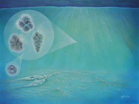 An artist's interpretation of the sea floor after the mass extinction that wiped out the dinosaurs. The three hair-covered forms (left) represent species of plankton that survived.