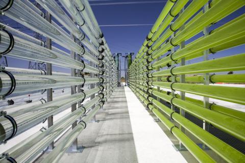 Biorreactores tubulares están llenos de algas verdes que fijan el CO2 en la Costa de la Luz, Andalucía.