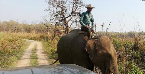 Uno de los elefantes que vimos desde el jeep.
