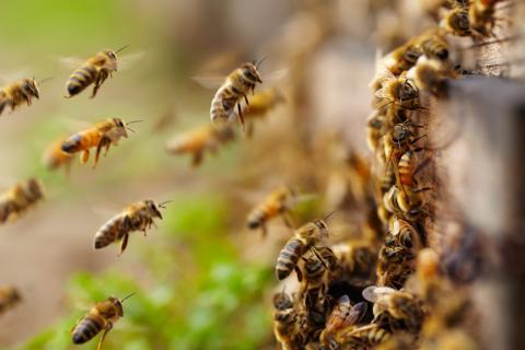 Un grupo de abejas