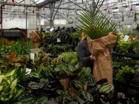 Opte por comprar plantas de interior en vez de ambientadores