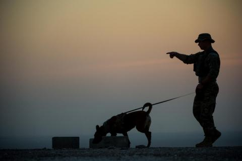 Un perro militar completa una detección en un entrenamiento en el Suroeste de Asia, 10 de enero de 2017