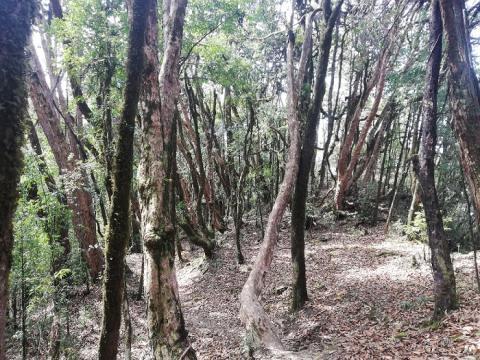bosque trek mardi himal