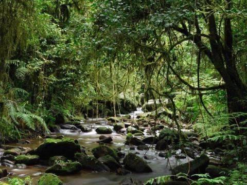 los bosques de madagascar