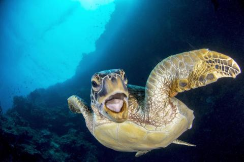Chinese photographer Richard (Quingran) Meng took this candid photo of a sea turtle in Indonesia.