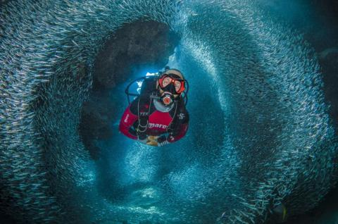 Divers get a separate category. Leena Roy won with this image of a diver swimming through a tunnel of silverside fish in the Cayman Islands.