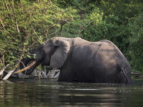 elefante en el rio