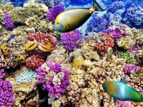 La Gran Barrera de Coral, Australia