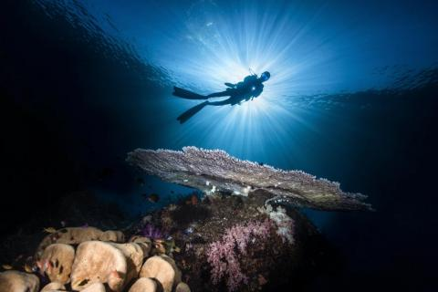 """This image by photographer Wayne Jones is titled """"Man from Mars."""" It was taken in the Halmahera sea in Indonesia."""