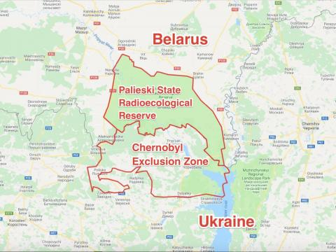 It adjoins the exclusion zone in neighboring Belarus, known as the Palieski State Radioecological Reserve. Though the explosion took place in Ukraine, much of the radiation from the Chernobyl disaster was blown north to Belarus.