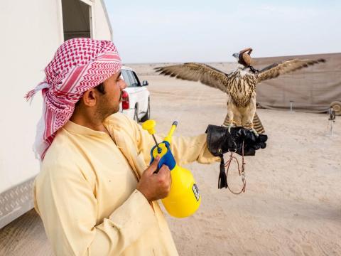 Fue fascinante observar la compleja forma en la que los halconeros entrenan a sus halcones para competir a cientos de kilómetros por hora, utilizando técnicas modernas y antiguas.