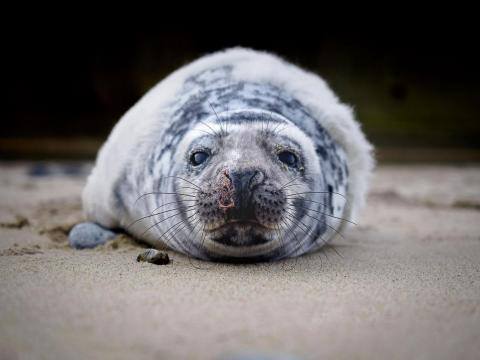 Lastly, Stefan Follows' close encounter with a grey seal pup on a beach near Norfolk in the UK yielded this adorable portrait.