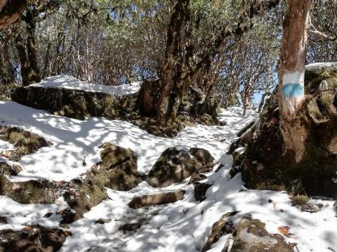 nieve y señales en trek mardi himal