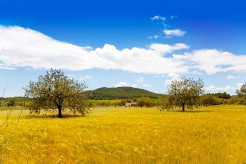 Sin embargo, la parte de la isla que más me gustó fue la vasta y tranquila campiña del norte de Ibiza.