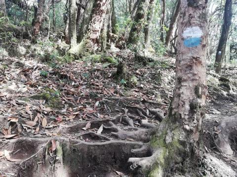 Puedes encontrar marcas en los árboles y las rocas.