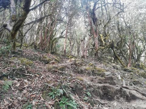 subida entre forest camp y low camp