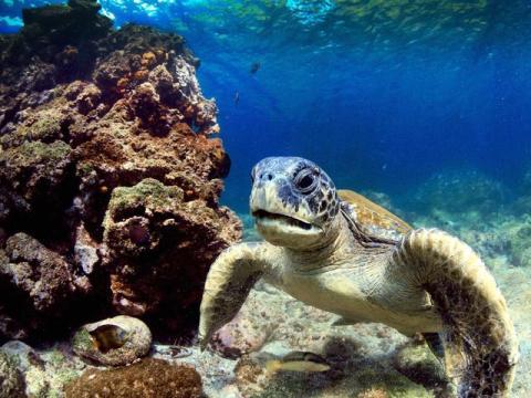 tortuga en las islas galapagos