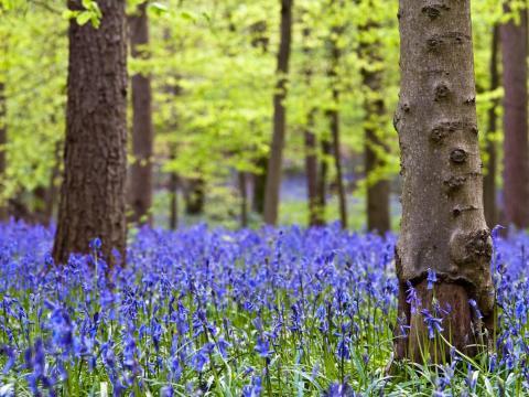 Aunque no te guste el personaje de Jar Jar, este bosque merece la pena