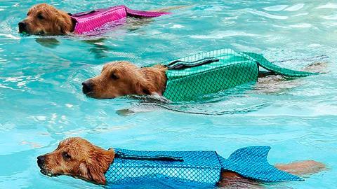 Amazon vende un chaleco salvavidas que convierte perros en sirenas
