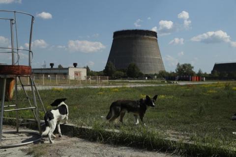 Perros callejeros se reúnen cerca de una torre de enfriamiento abandonada en la central nuclear de Chernóbil el 18 de agosto de 2017.