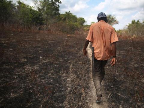 En ausencia de árboles, que anclan el suelo con sus raíces, puede producirse una erosión generalizada en zonas tropicales como el Amazonas.