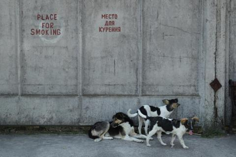 Don't pet the stray dogs, unless you're a Chernobyl worker.