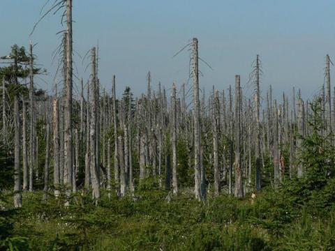 Los bosques cerca de las montañas Jizera en la República Checa están a punto de morir a causa de la lluvia ácida.